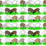 Fondo con le pecore Fotografie Stock Libere da Diritti