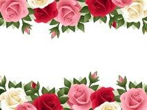 Fondo con le rose colorate. Fotografie Stock Libere da Diritti