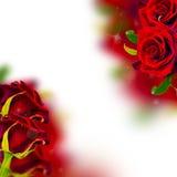 Fondo con le rose rosse immagini stock libere da diritti