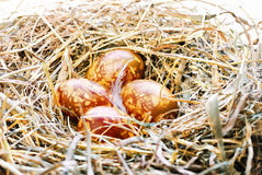Fondo con le uova di Pasqua nel nido dell'uccello Immagine Stock Libera da Diritti