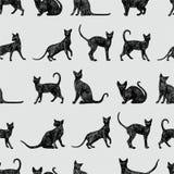 Fondo con los gatos negros Imágenes de archivo libres de regalías