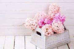 Fondo con los jacintos rosados frescos en caja Foto de archivo