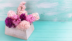 Fondo con los jacintos rosados frescos en caja en el pla de madera verde Imagenes de archivo