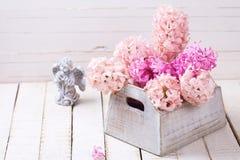 Fondo con los jacintos rosados frescos en caja y ángel en blanco Fotografía de archivo