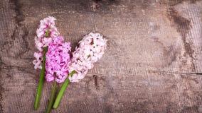 Fondo con los jacintos rosados frescos en tablones de madera del vintage Fotos de archivo libres de regalías