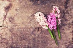 Fondo con los jacintos rosados frescos en tablones de madera del vintage Fotografía de archivo