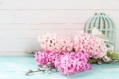 Fondo con los jacintos rosados frescos y sauce en la turquesa p Foto de archivo libre de regalías