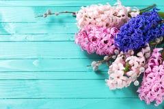 Fondo con los jacintos rosados frescos y sauce en painte verde Fotografía de archivo