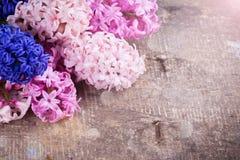 Fondo con los jacintos rosados, violetas, azules, púrpuras frescos Fotografía de archivo libre de regalías