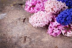 Fondo con los jacintos rosados, violetas, azules, púrpuras frescos Imagen de archivo libre de regalías