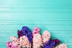 Fondo con los jacintos rosados, violetas, azules, púrpuras frescos en el tu Imagenes de archivo