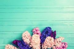 Fondo con los jacintos rosados, violetas, azules, púrpuras frescos en el tu Fotos de archivo libres de regalías