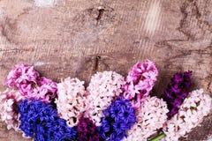 Fondo con los jacintos rosados, violetas, azules, púrpuras frescos en VI Foto de archivo