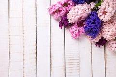 Fondo con los jacintos rosados, violetas, azules, púrpuras frescos en wh Foto de archivo