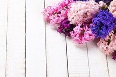 Fondo con los jacintos rosados, violetas, azules, púrpuras frescos en wh Fotos de archivo libres de regalías