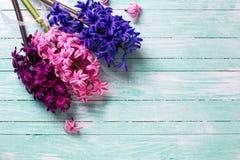 Fondo con los jacintos rosados, violetas frescos en la madera de la turquesa Foto de archivo