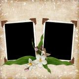 Fondo con los marcos y las flores Imagenes de archivo