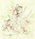 Fondo con los narcisos Imagen de archivo libre de regalías