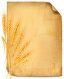 Fondo con los oídos amarillos maduros del trigo libre illustration