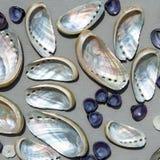 Fondo con los seashells del nácar Imagen de archivo