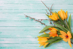 Fondo con los tulipanes y las flores frescos del sauce Fotografía de archivo libre de regalías