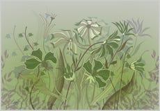 Fondo con los wildflowers Imagenes de archivo