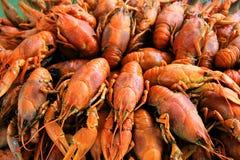 Fondo con molti crawfishes Immagini Stock Libere da Diritti