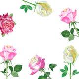 Fondo con roses-02 rosso Fotografia Stock Libera da Diritti