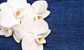 Fondo con una flor Foto de archivo libre de regalías