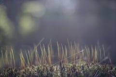 Fondo con una maleza de la naturaleza en tono y luz azules Foto de archivo