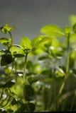 Fondo con verdes de la primavera Imagen de archivo libre de regalías