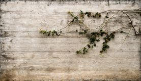 Fondo concreto de Rustical con adorno floral foto de archivo libre de regalías