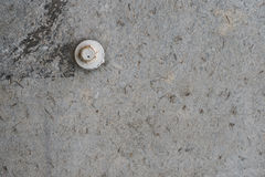 Fondo concreto gris de la textura con un perno blanco Foto de archivo