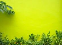 Fondo concreto verde con poco árbol contra la pared Imágenes de archivo libres de regalías