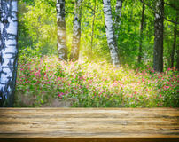 Fondo confuso soleggiato di estate della foresta con le betulle, di legno vuoto Immagini Stock