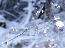 Fondo congelato del ramo Fotografia Stock