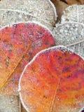 Fondo congelato delle foglie Immagini Stock