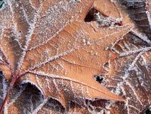 Fondo congelato di autunno Fotografia Stock