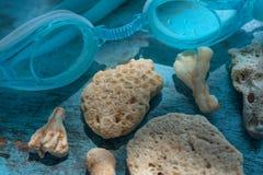 Fondo coralino de los organismos del océano con los vidrios que se zambullen para bucear Concepto que viaja de la playa soleada Fotos de archivo