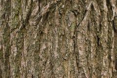 fondo, corteccia di legno, legno Immagini Stock