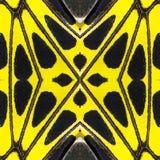 Fondo creado de la pieza de alas de la mariposa Fotografía de archivo libre de regalías