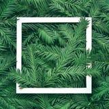 Fondo creativo de la rama del pino con el marco del Libro Blanco Concepto del Año Nuevo y de la Feliz Navidad Foto de archivo libre de regalías