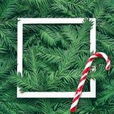 Fondo creativo de la rama del pino con el marco del Libro Blanco Concepto del Año Nuevo y de la Feliz Navidad Fotografía de archivo libre de regalías