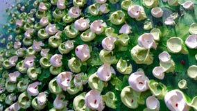 Fondo cremoso verde e bianco di struttura 3D Fotografie Stock Libere da Diritti