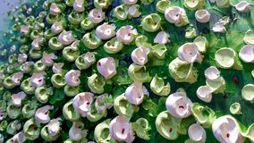 Fondo cremoso verde y blanco de la textura 3D Fotos de archivo libres de regalías