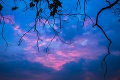 Fondo crepuscular hermoso del cielo con el ambiente romántico del árbol Imágenes de archivo libres de regalías