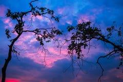 Fondo crepuscular hermoso del cielo con el ambiente romántico del árbol Fotografía de archivo libre de regalías