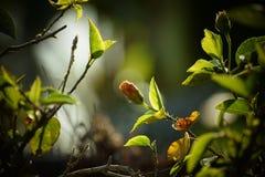 Fondo crescente della sfuocatura del fiore fotografia stock