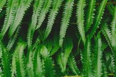 fondo crudo del modello della foresta della pianta della felce aquilina Fotografia Stock Libera da Diritti