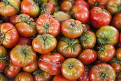 Fondo cualitativo de los tomates Tomates frescos Tomates rojos Tomates orgánicos del mercado del pueblo Fotos de archivo